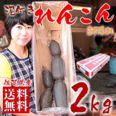 【送料無料】佐賀県産 朝採りレンコン 2kg 佐賀県産の名産品れんこんは大地の美味しさをぎゅっと凝縮した自慢の蓮根