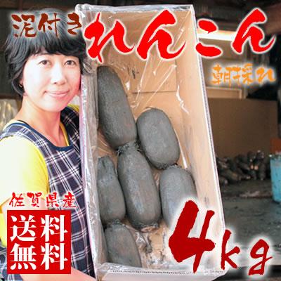 【送料無料】佐賀県産 朝採りレンコン 4kg 佐賀県産の名産品れんこんは大地の美味しさをぎゅっと凝縮した自慢の蓮根