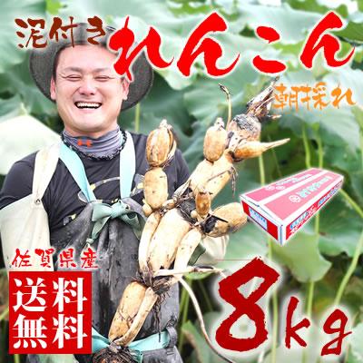 【送料無料】佐賀県産 朝採りレンコン 8kg 佐賀県産の名産品れんこんは大地の美味しさをぎゅっと凝縮した自慢の蓮根